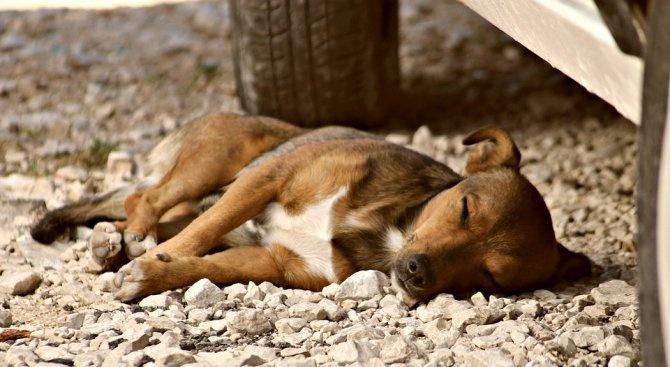 11 кучета и 1 котка са били отровени до детска градина в кюстендилско село