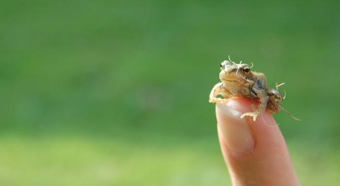 Откриха останки от една от най-древните жаби в Аризона