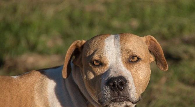 Куче нахапа баба във Велико Търново