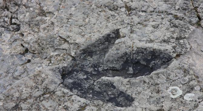 Откриха нов вид дребен динозавър в Австралия