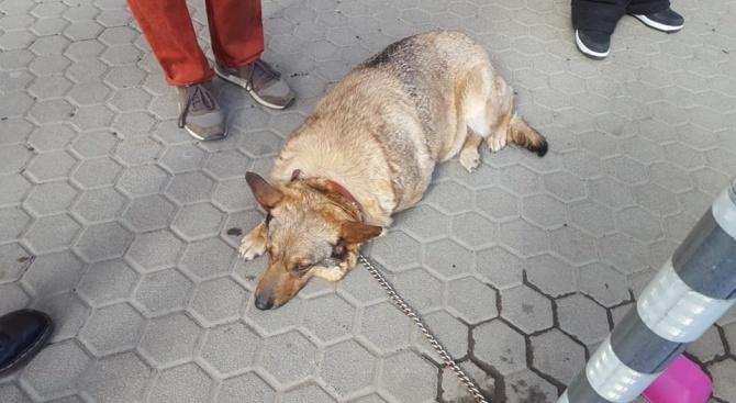 Изоставиха куче, завързано за стълб, на столичен булевард