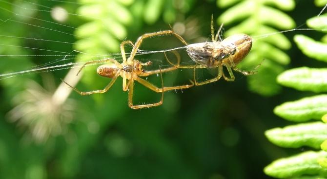 """Учени кръстиха нови видове паяци на щурмоваците от """"Междузвездни войни"""""""
