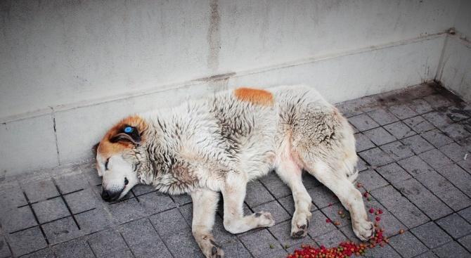 Застреляха куче в сливенски квартал