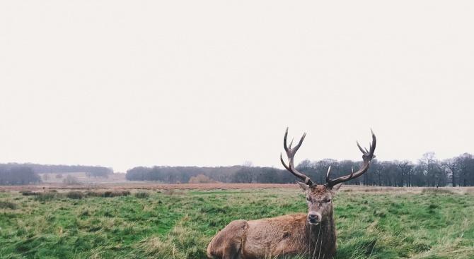 Бракониери са застреляли елен в Шуменско
