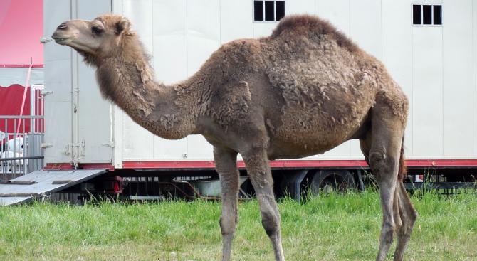 В Словакия ще забранят дресурата и представленията с диви животни в цирковете