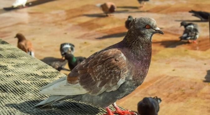 Германка се обърна към полицията заради гълъби-вандали