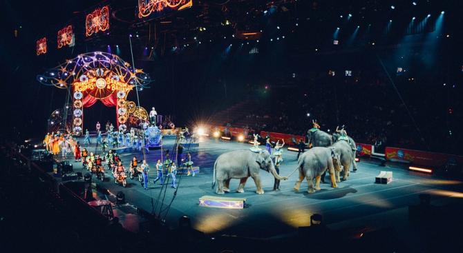 Словакия забранява дивите животни в цирковете