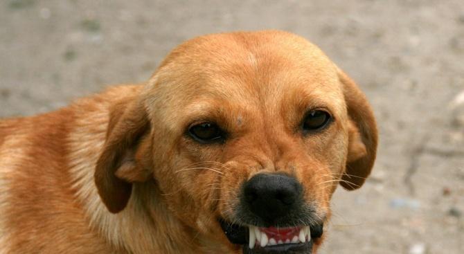 Куче нахапа дете в село Бенковски