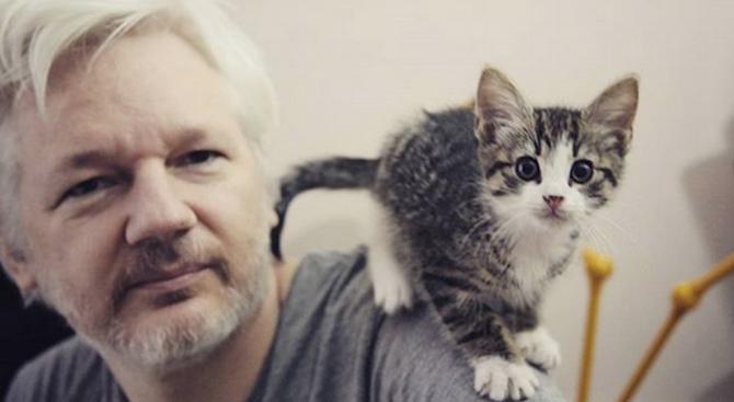 Любители на животните се загрижиха за котарака на Джулиан Асанж