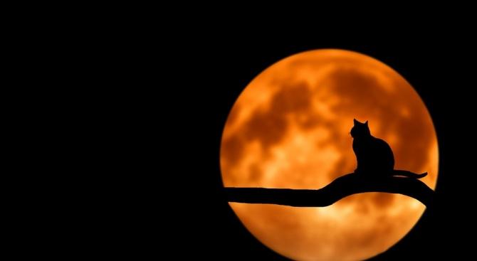 Розова Луна в петък