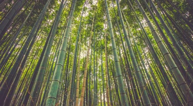 12 милиона хектара тропически гори са унищожени миналата година