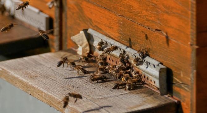 Пчелари излизат на протест срещу масово отравяне на пчели в Плевенско