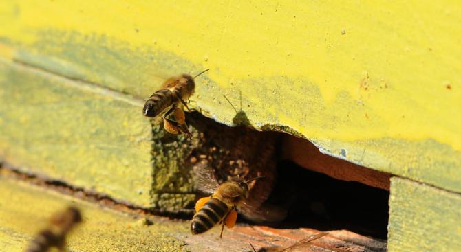 """Повече от сто пчелни семейства са унищожени около язовир """"Стойковци"""" над Благоевград"""