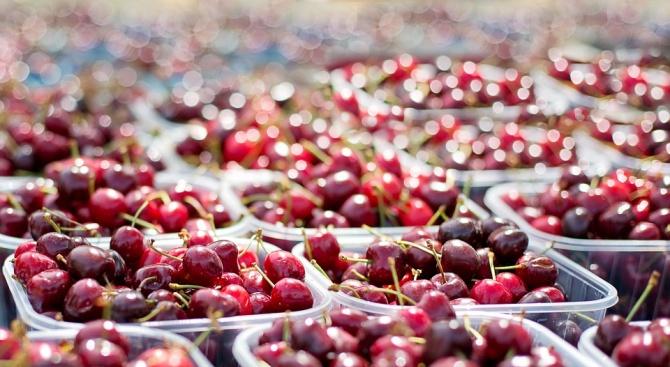 Вандали опожариха крайпътен пазар за череши