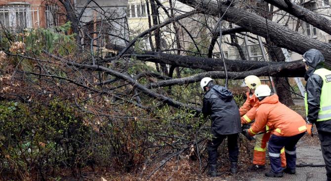 Служители на Противопожарните служби са отстранили от пътища паднали дървета в Плевенско