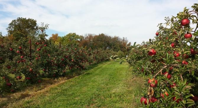 Земеделци получиха над 3 млн. лева компенсации за зимните пръскания