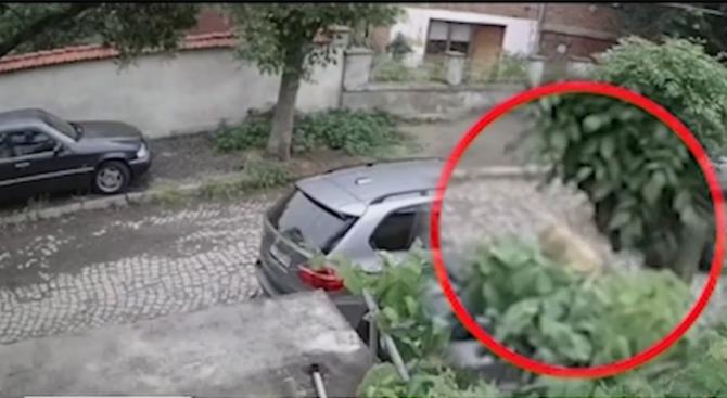 Ямболия прегази кучето на съседите си