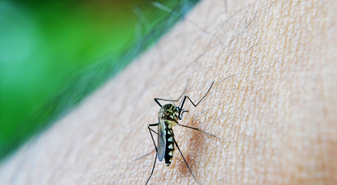 Пръскат срещу комари в Силистренска община