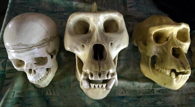 Неандерталците са изчезнали заради намалена плодовитост