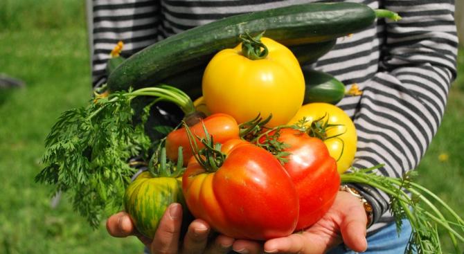 Капризните деца ще изядат по-бързо зеленчуците си, ако се хранят прави