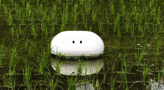 """""""Патица"""" робот патрулира в японски оризища"""