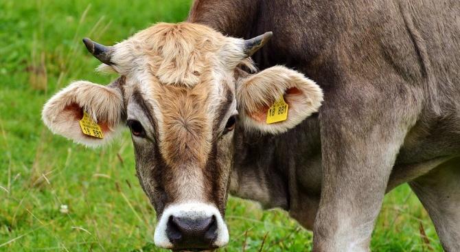 ДФЗ: Животновъдите ще получат 26,3 млн. лева de minimis