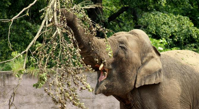 Слон нападна и рани тежко пазач в канадски зоопарк