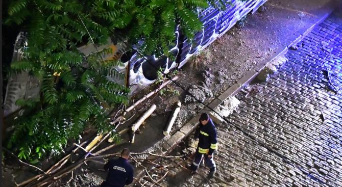 10 сигнала за завирявания и паднали клони на дървета в София