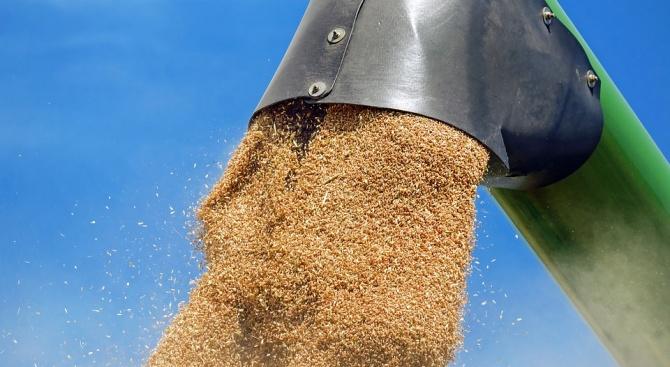 Жътвата на пшеница в Русенско започна със среден добив от 535 кг/дка