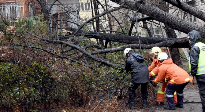 На сигнали за паднали дървета след проливните дъждове са реагирали пожарникарите в Габрово