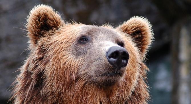 РИОСВ-Смолян провери 10 сигнала за щети от мечки