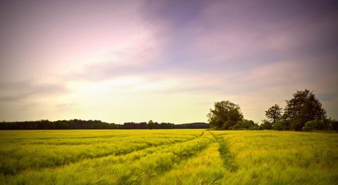 Цената на земята в област Добрич за 2018 година е близо 1700 лева на дка