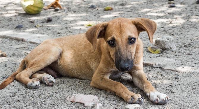 Закопчаха ромката, обесила кучето си в Раковски