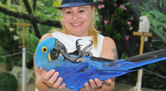 Тони Димитрова се радва на папагали от три континента