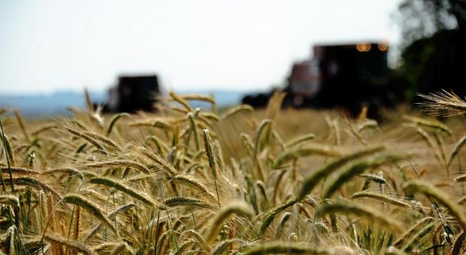 Два масива с узряло зърно са изгорели в Монтанско
