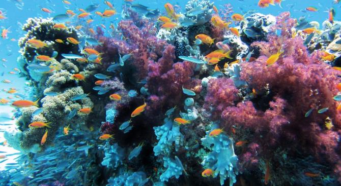 Австралийски учени присаждат пробно корали на Големия бариерен риф