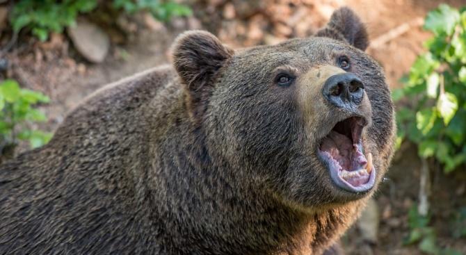 Природозащитници спасиха млада мъжка мечка от капан в Северна Гърция