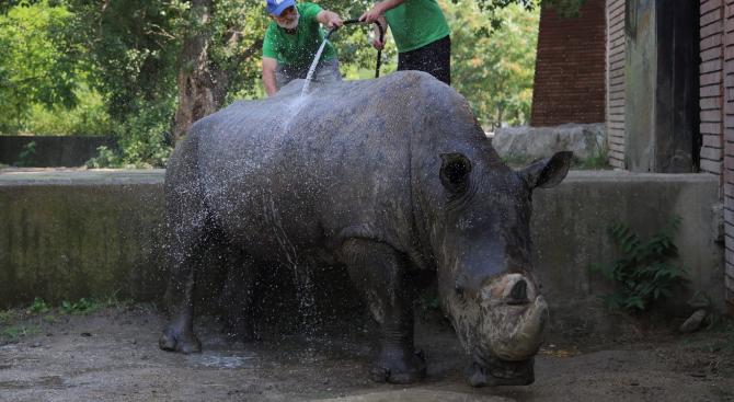 В Софийския зоопарк в жегите всичко е под контрол, студен душ разхлажда животните