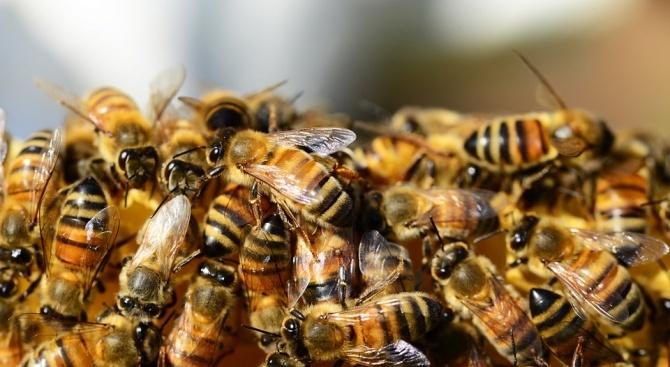 Масов мор на пчели в Русия