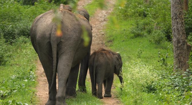 В Индия гонят слоновете от жп релсите с жужене на пчели