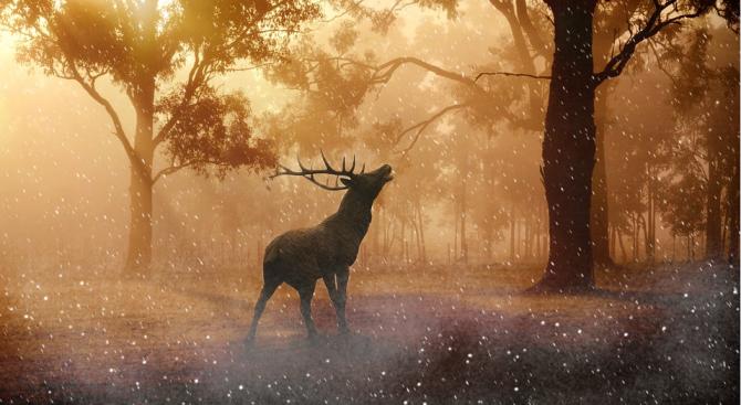 Над 100 000 животински и растителни вида са застрашени от човешката дейност