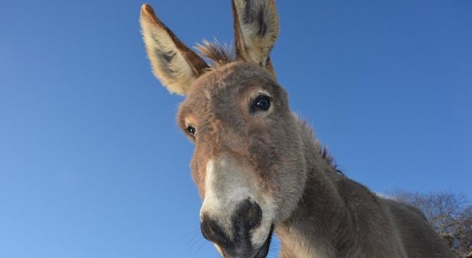 Музей на магарето е открит в Черна гора