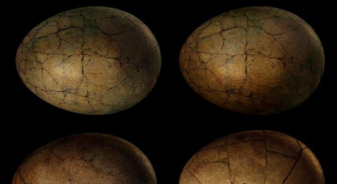 Момче откри 11 динозавърски яйца на 66 милиона години в Китай
