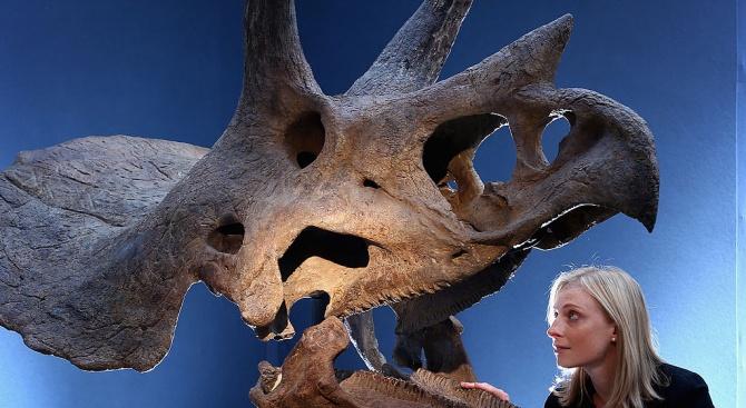 Студент откри динозавърски череп на 65 милиона години при първите си разкопки