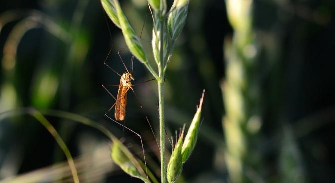 Започва обработване в Благоевград срещу комари и мухи