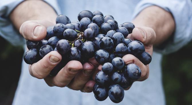 Буря унищожи почти цялата реколта от грозде в село Долна Градешница