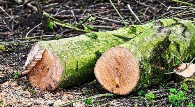 Откриха 20 кубика незаконни дърва в двор на фирма