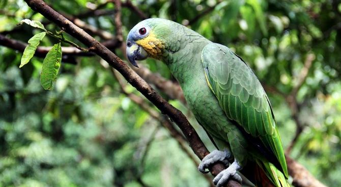 Учени откриха останки от огромен папагал
