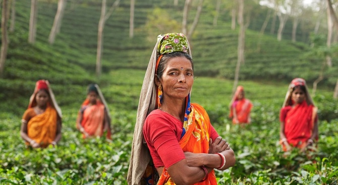 Посадиха над 220 милиона дръвчета за ден в Индия