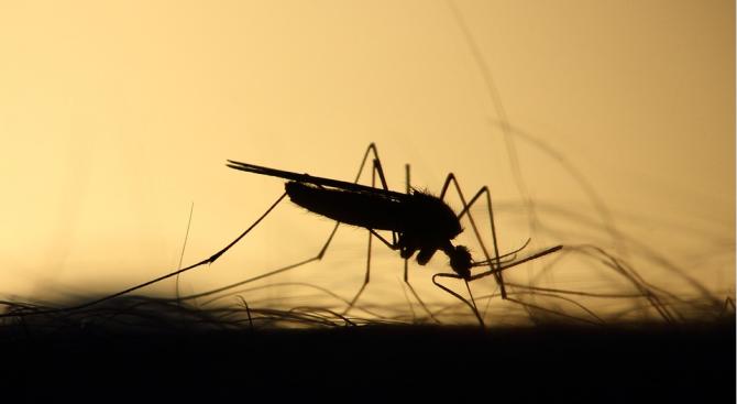 Изчислиха любимата кръвна група на комарите